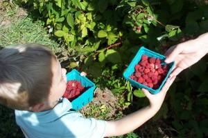 Raspberry Rhubarb Buckle