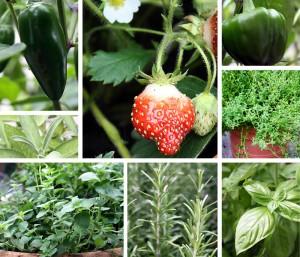 garden collage pictures