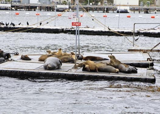 san diego harbor sea lions harbor tour