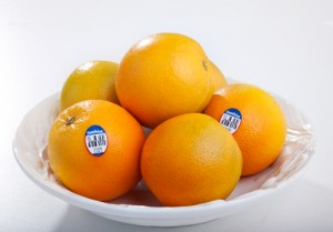 valencia orange photo