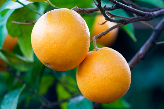 valencia oranges recipe