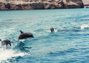 dolphins jumping in la paz
