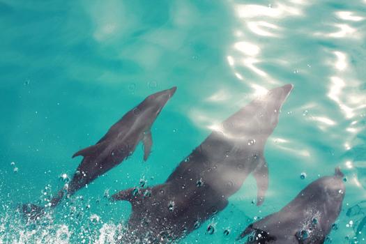 dolphins in isla espiritu santo