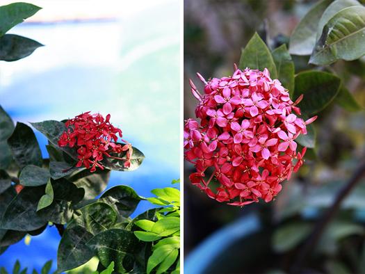 hotel california pool garden