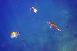 fish snorkeling isla espiritu santo