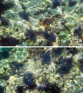 isla espiritu santo snorkeling reef photos