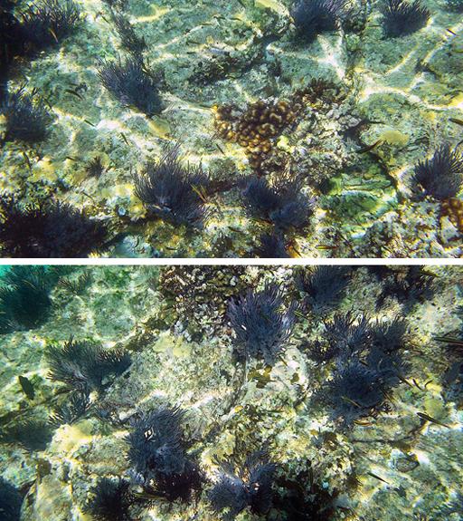 snorkeling in la paz isla espiritu santo reef photos