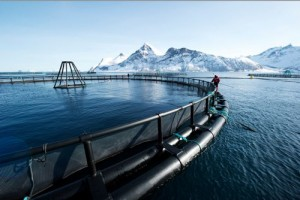 norway salmon farm