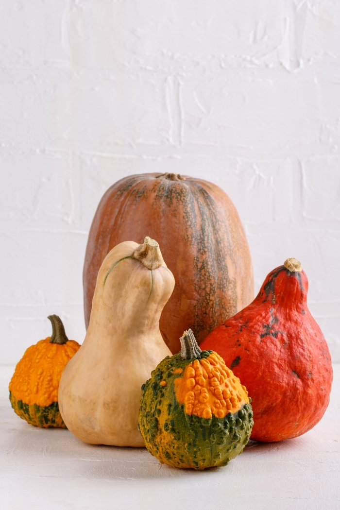 winter squash and pumpkins on a white counter top